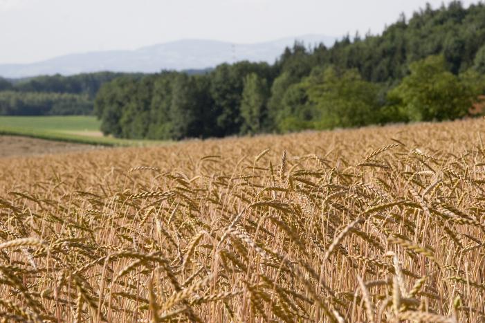 Landwirtschaft Genusskrone 2008 2009 049