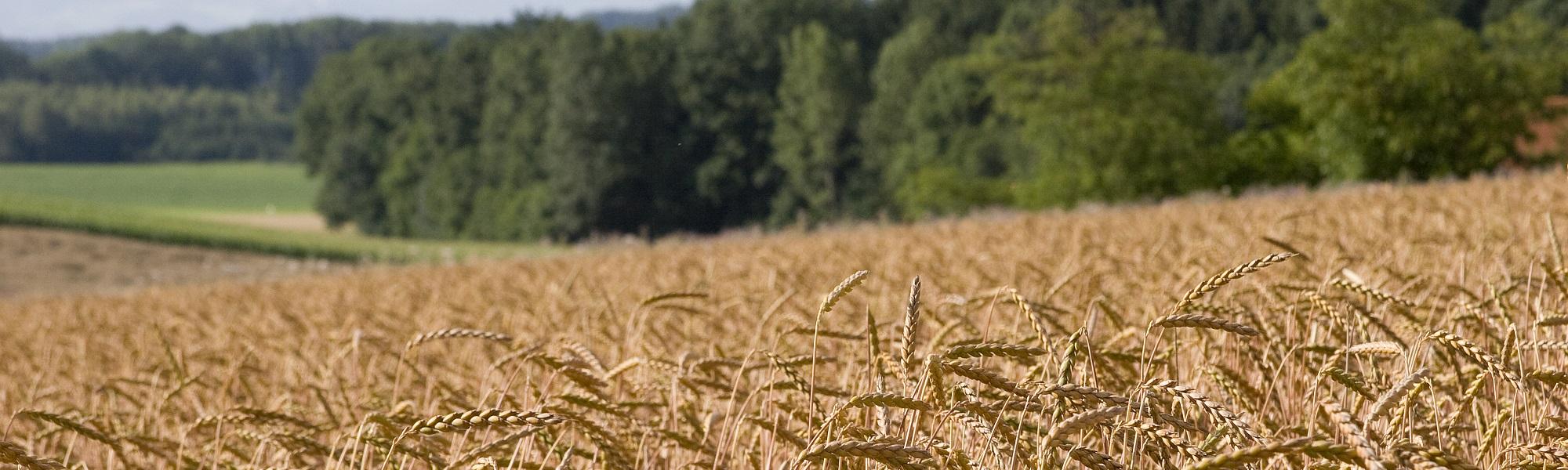 Über 60 ha Anbaufläche